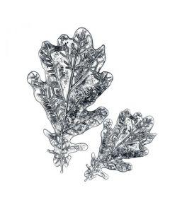 """Fustella Sizzix Impresslits 3D (Thinlits + Embossing) """"Foglia di quercia"""" - 665374"""